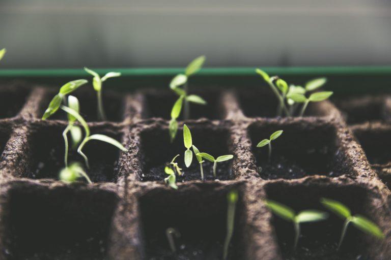 Promotie in de tuin